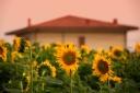 till soon sunny Tuscany