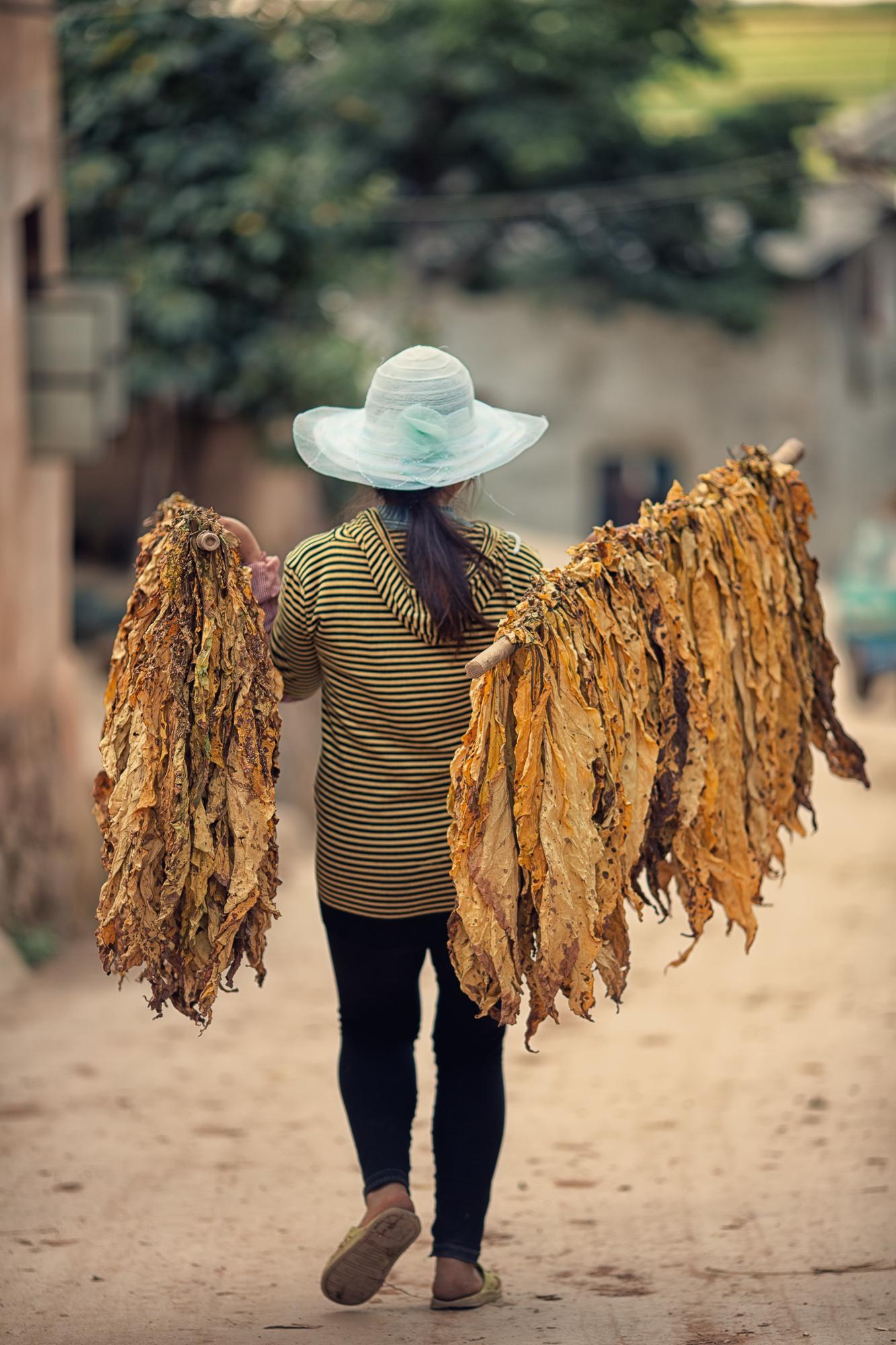 Tobacco road~ Yunnan